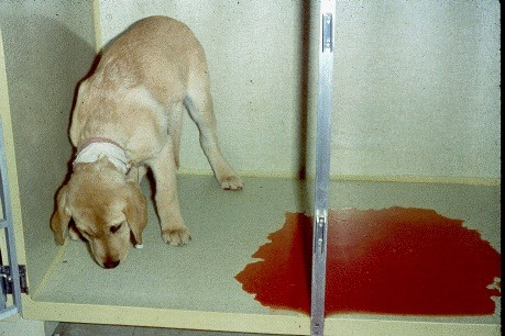 Image result for dog with bloody diarrhoea