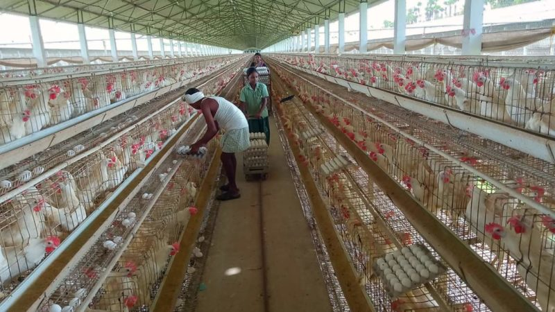 GENERAL GUIDELINES FOR FEED FORMULATION OF COMMERCIAL
