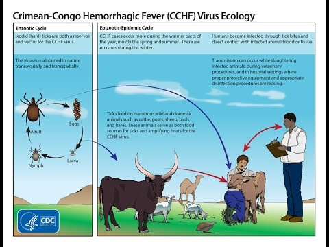 "BEWARE OF ""TICKING BOMB""-THE CRIMEAN-CONGO HEMORRHAGIC FEVER (CCHF)"