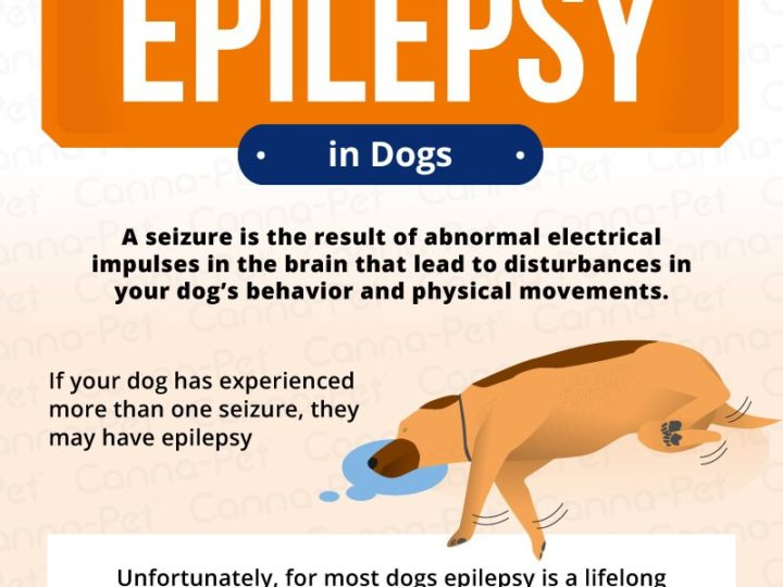 EPILEPSY IN DOGS: DIAGNOSIS & TREATMENT