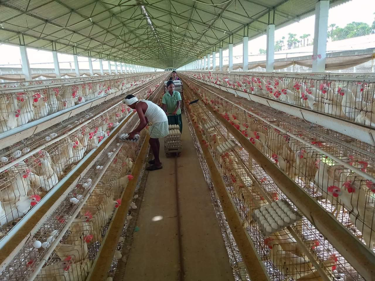 Housing for poultry business